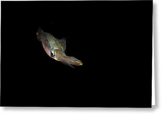 Scuba Diving Greeting Cards - Squid Stare Greeting Card by Jean Noren