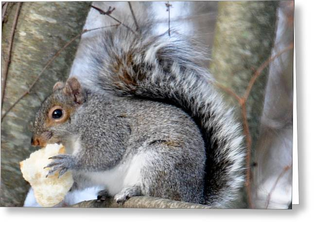 Winter Landscape With Animals Greeting Cards - Squirrel and His Lunch  Greeting Card by Caroline Stella