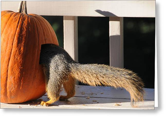 Pumpkin On A Stick Greeting Cards - Squirrel and Pumpkin - Breakfast Greeting Card by Aaron Spong