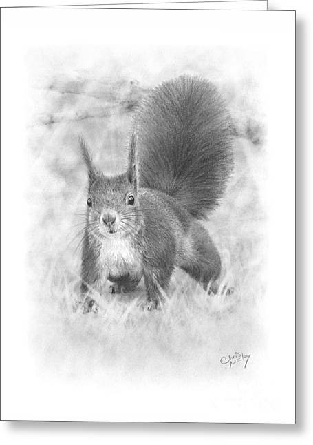 Red squirrel drawing