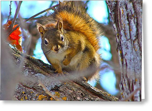 Fruit Tree Art Greeting Cards - Squirrel duty. Greeting Card by Johanna Bruwer