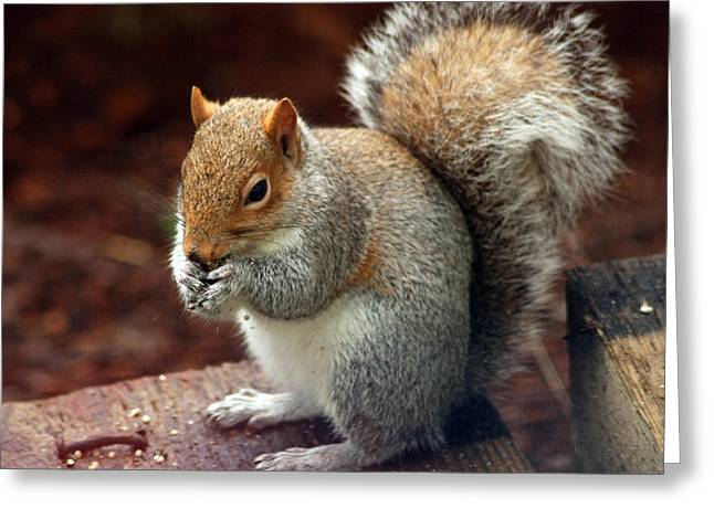 Ron Roberts Photography Prints Greeting Cards - Squirrel Eating Greeting Card by Ron Roberts