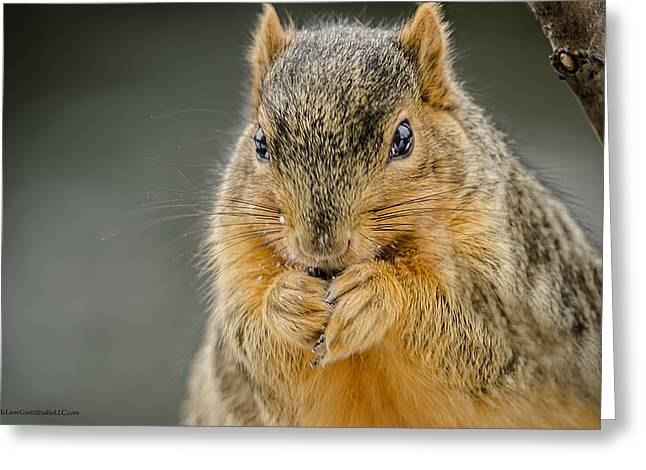 Wild Orchards Greeting Cards - Squirrel Expectations Greeting Card by LeeAnn McLaneGoetz McLaneGoetzStudioLLCcom