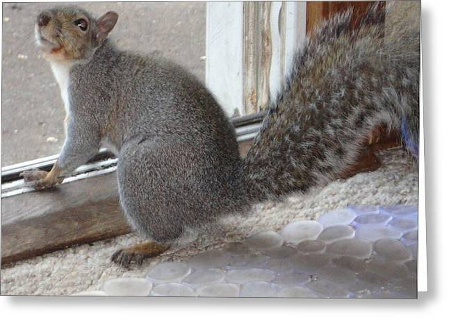 Guy Ricketts Photography Greeting Cards - Squirrel Greeting Greeting Card by Guy Ricketts