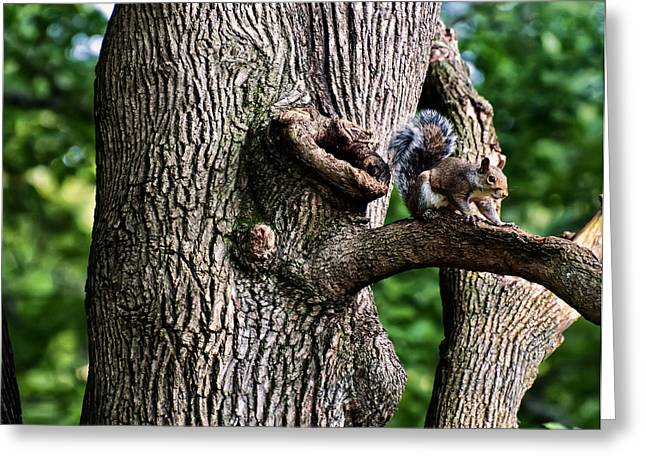 Animal Pics Greeting Cards - Squirrel guarding watering knot Greeting Card by Chris Flees