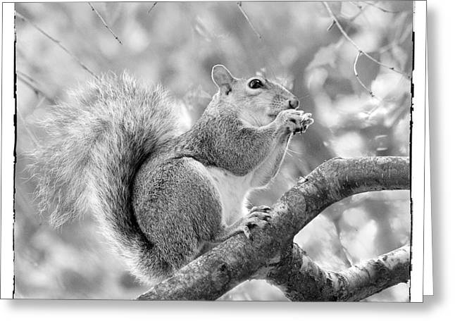 Lounge Digital Art Greeting Cards - Squirrel in a Tree - Black and White Greeting Card by Natalie Kinnear