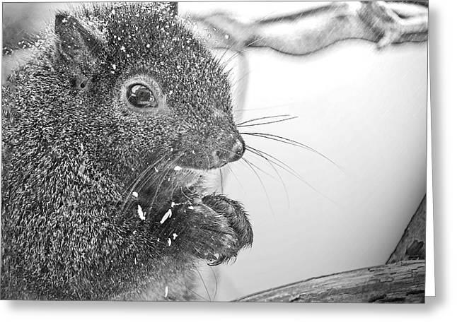 Squirrel In Black And White Greeting Card by LeeAnn McLaneGoetz McLaneGoetzStudioLLCcom