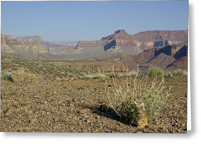Looking At The Past Greeting Cards - Squirrel in the Grand Canyon Greeting Card by Brian Kamprath