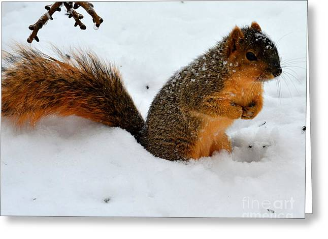Fox Squirrel Greeting Cards - Squirrel in the Snow Greeting Card by Charles Trinkle