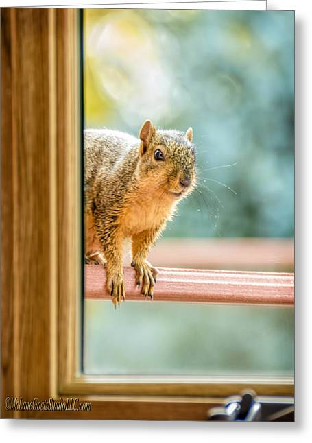 Wild Orchards Greeting Cards - Squirrel in the Window Greeting Card by LeeAnn McLaneGoetz McLaneGoetzStudioLLCcom