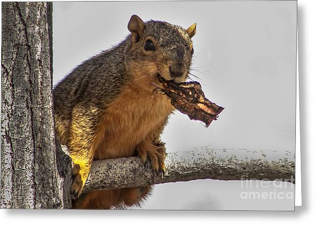 Haybales Greeting Cards - Squirrel Lunch Time Greeting Card by Robert Bales
