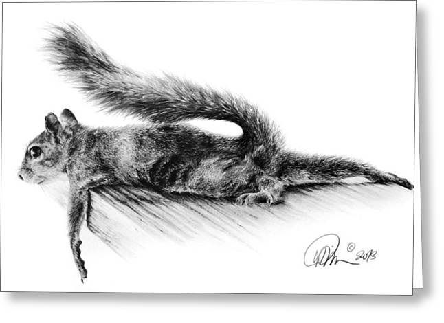 Squirrel Drawings Greeting Cards - Squirrel Greeting Card by Mario Pichler