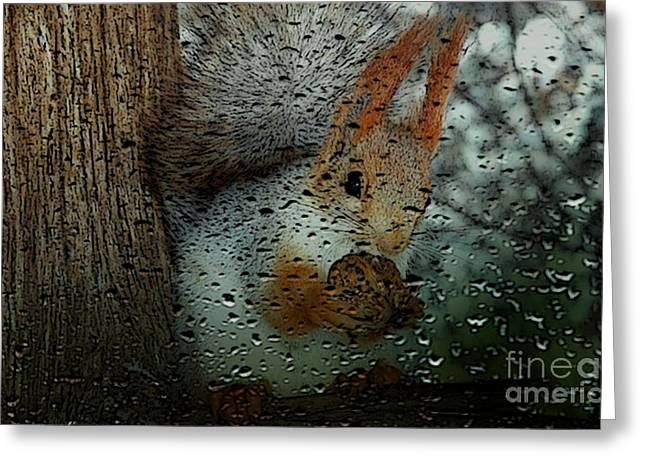 Tree Mixed Media Greeting Cards - Squirrel Greeting Card by Marvin Blaine