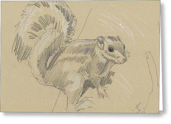 Squirrel Drawings Greeting Cards - Squirrel Greeting Card by Mike Jory