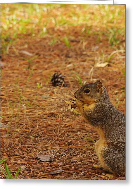 Fox Squirrel Greeting Cards - Squirrel Munching Out Greeting Card by Billy  Griffis Jr