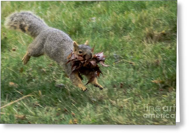 Haybales Greeting Cards - Squirrel Nest Bulding Greeting Card by Robert Bales