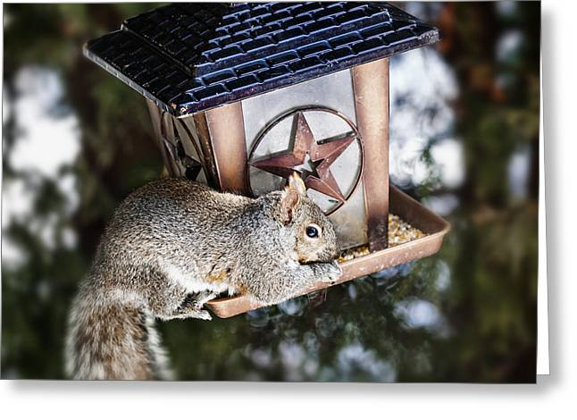 Bird-feeder Greeting Cards - Squirrel on bird feeder Greeting Card by Elena Elisseeva