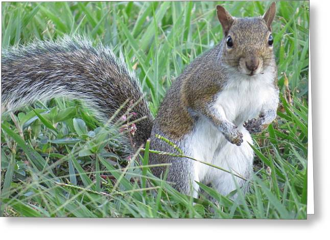 Squirrel Greeting Cards - Squirrel On The Grass Greeting Card by Zina Stromberg