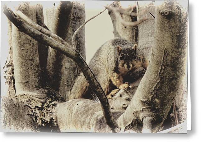 Fox Squirrel Greeting Cards - Squirrel on the Hunt Greeting Card by Bonnie Willis