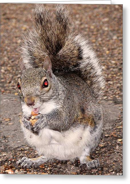 Tree Photographs Greeting Cards - Squirrel Possessed Greeting Card by Rona Black