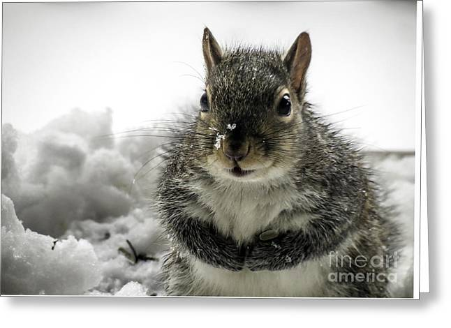Praying Hands Greeting Cards - Squirrel Praying For Food Greeting Card by Crissy Anderson
