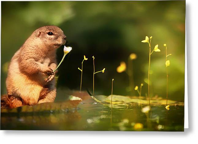 Ground Level Greeting Cards - Squirrel with a Flowers Greeting Card by Mountain Dreams