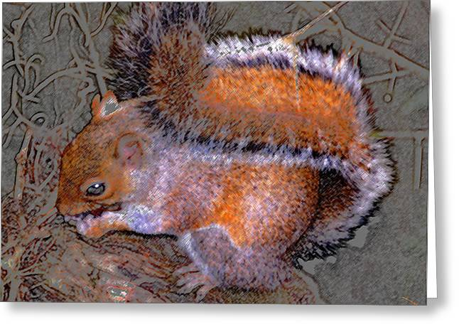Squirrel Digital Greeting Cards - Squirrel with acorn Greeting Card by David Lee Thompson