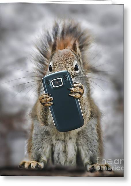 Cellphone Greeting Cards - Squirrel With Cellphone Greeting Card by Mike Agliolo