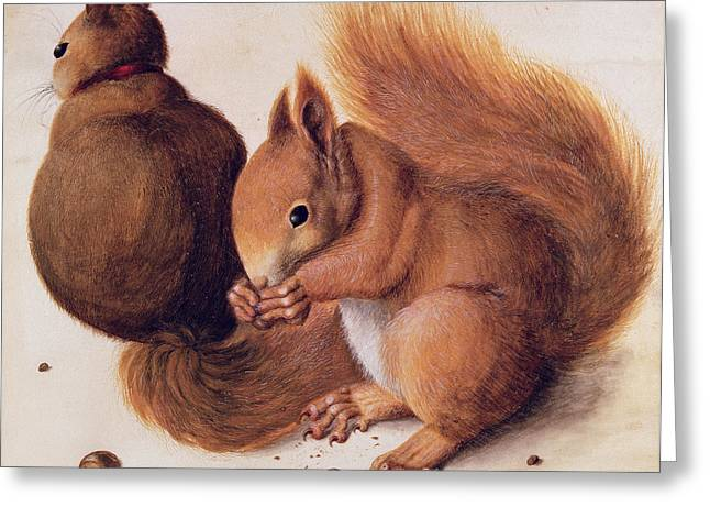 Les Greeting Cards - Squirrels Greeting Card by Albrecht Duerer