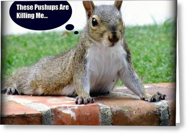Furry Animals Greeting Cards - Squirrely Push Ups Greeting Card by Karen Wiles
