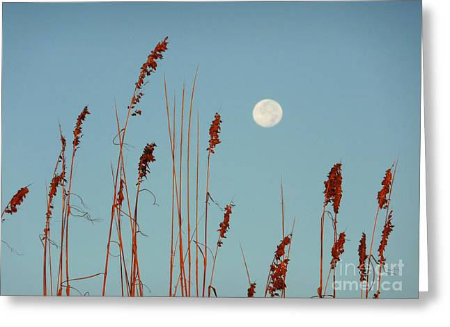 Sea Moon Full Moon Greeting Cards - St. Augustine Beach Moonrise Greeting Card by Phil King