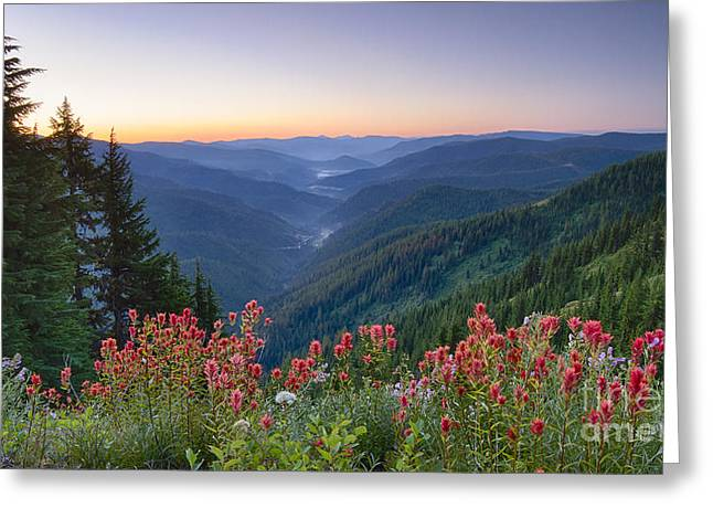 North Idaho Greeting Cards - St. Joe Wildflowers Greeting Card by Idaho Scenic Images Linda Lantzy