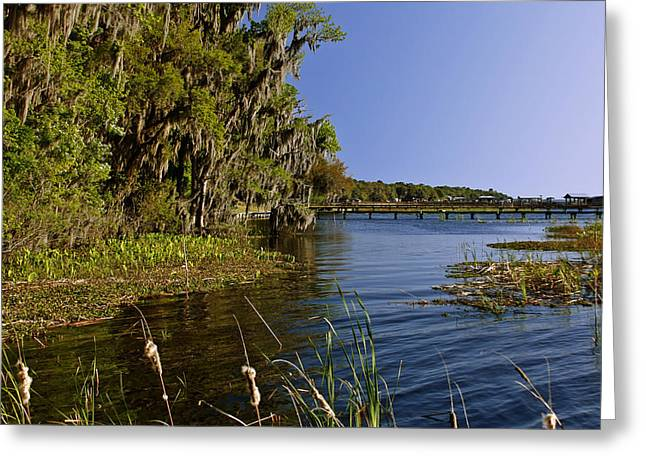 Moss Man Greeting Cards - St Johns River Florida Greeting Card by Christine Till