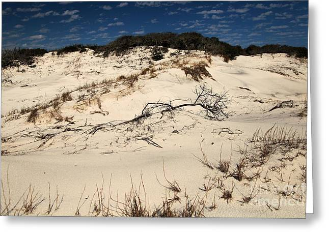 Pristine Beaches Greeting Cards - St. Joseph Sand Dunes Greeting Card by Adam Jewell