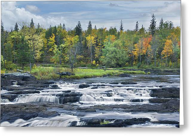 Cooke Greeting Cards - St Louis River Jay Cooke State Park Greeting Card by Tim Fitzharris
