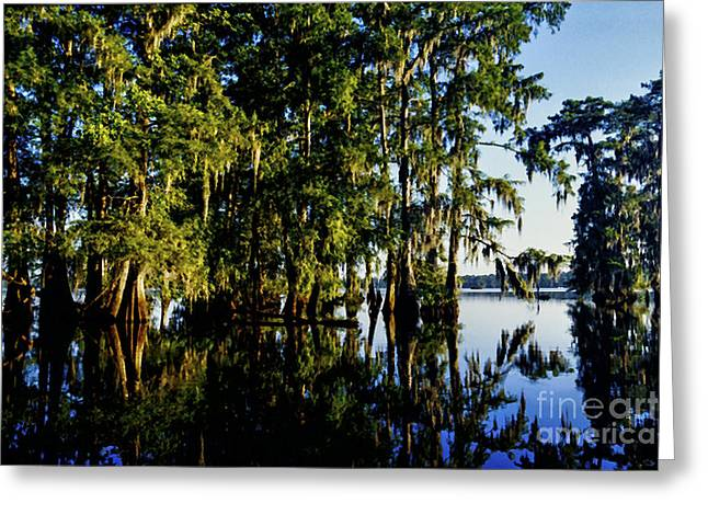 Acadian Greeting Cards - St Martin Parish Lake Martin Cypress Swamp Greeting Card by Thomas R Fletcher