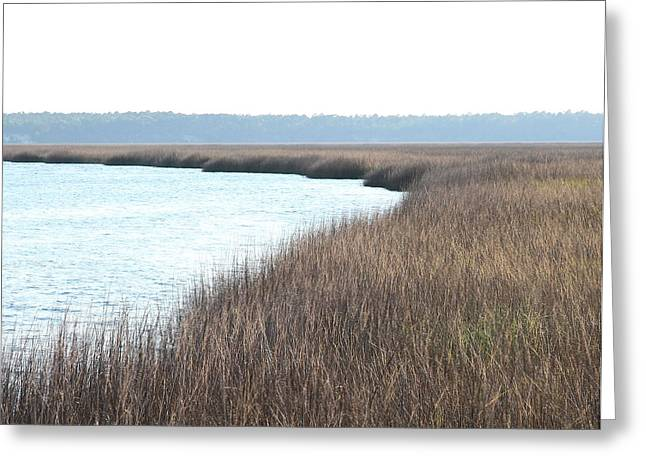 Gilman Greeting Cards - St. Marys marsh Greeting Card by Cathy Lindsey