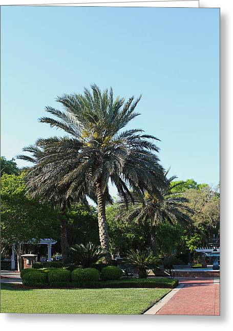 Gilman Greeting Cards - St. Marys Palm 2 Greeting Card by Cathy Lindsey