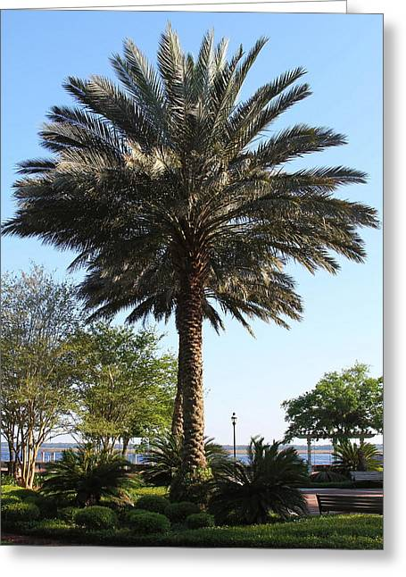 Gilman Greeting Cards - St. Marys Palm Greeting Card by Cathy Lindsey