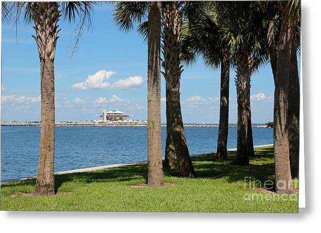 St. Petersburg Florida Greeting Cards - St Pete Pier through Palm Trees Greeting Card by Carol Groenen