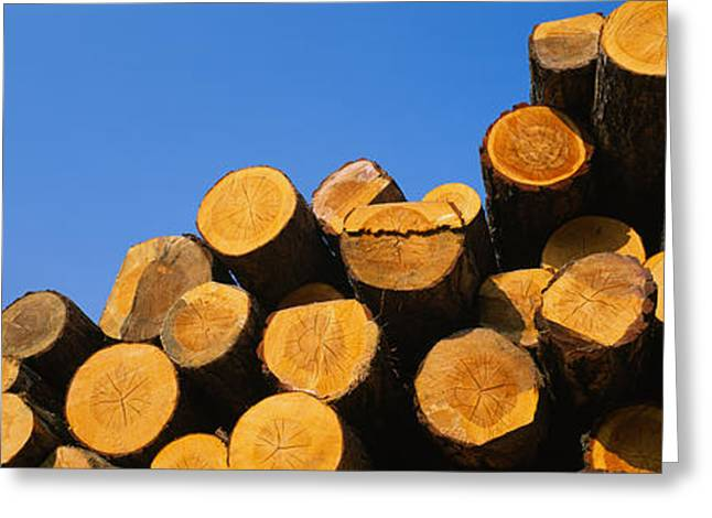 Photography Of Trees Greeting Cards - Stack Of Wooden Logs In A Timber Greeting Card by Panoramic Images