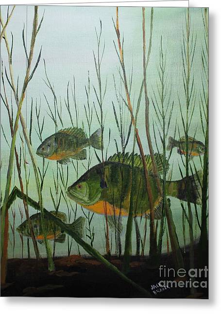Stacked Blue Gills Greeting Card by Jack G  Brauer