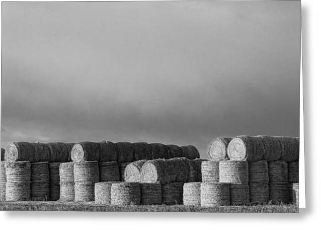 Hay Bales Greeting Cards - Stacked Round Hay Bales BW Panorama Greeting Card by James BO  Insogna