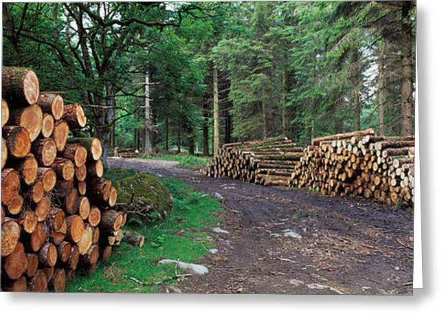 Deforestation Greeting Cards - Stacks Of Logs In Forest, Burrator Greeting Card by Panoramic Images