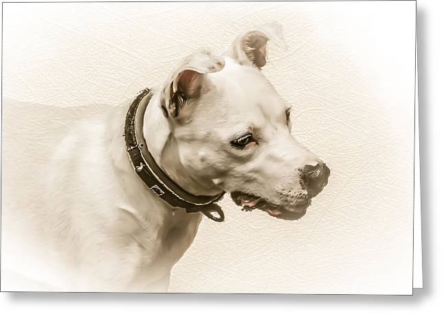 Bull Terrier Greeting Cards - Staffordshire Terrier Greeting Card by Ian Hufton