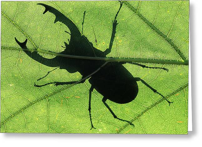 Jan Vermeer Photographs Greeting Cards - Stag Beetle Male On Leaf Greeting Card by Jan Vermeer