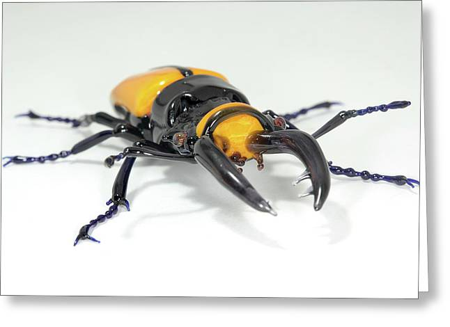 Stag Beetle Greeting Card by Tomasz Litwin