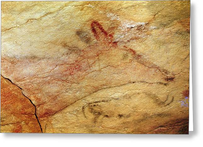 Cave Wall Greeting Cards - Stag From The Caves Of Altamira, C.15,000 Bc Cave Painting Detail Of 42412 Greeting Card by Prehistoric