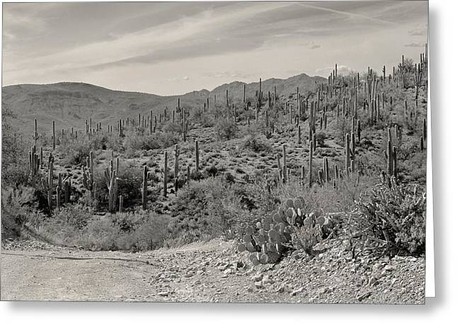 Cree Greeting Cards - Saguaro Hills Greeting Card by Gordon Beck