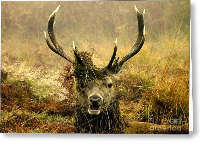Park Scene Greeting Cards - Stag Party The Series. One More For The Road Greeting Card by Linsey Williams